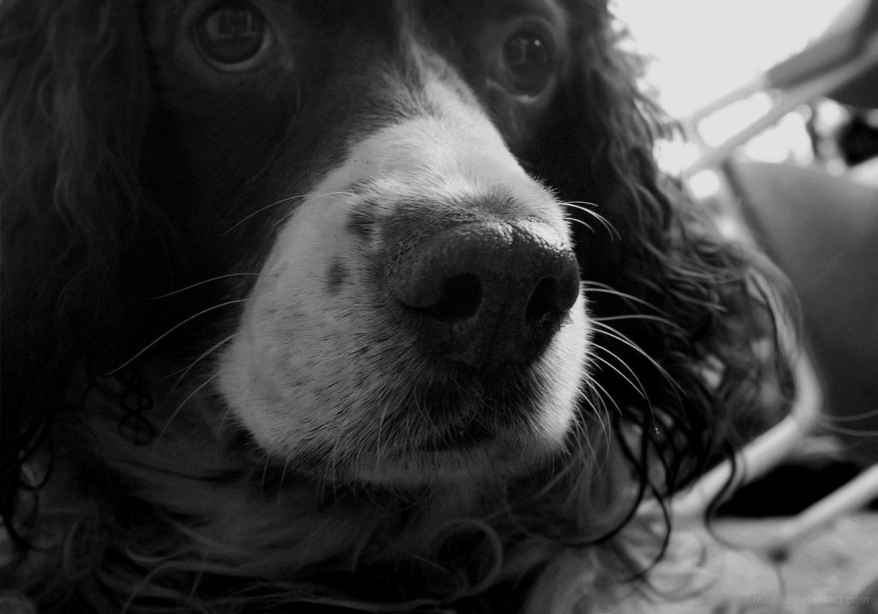 Dog – Bobby