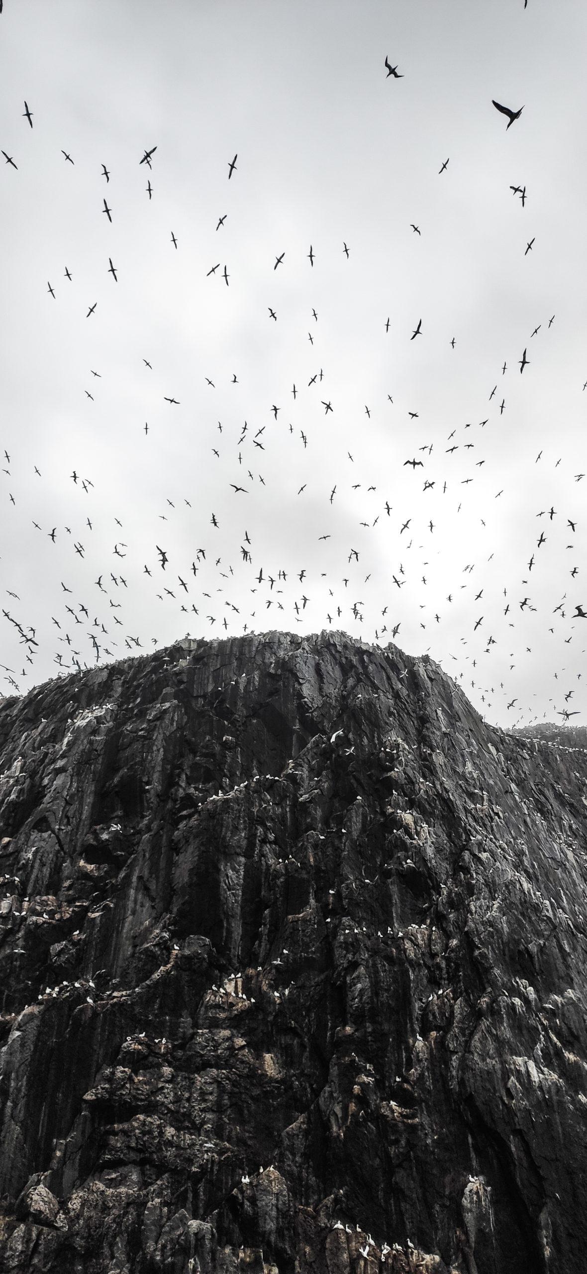 Bass Rock, Scotland